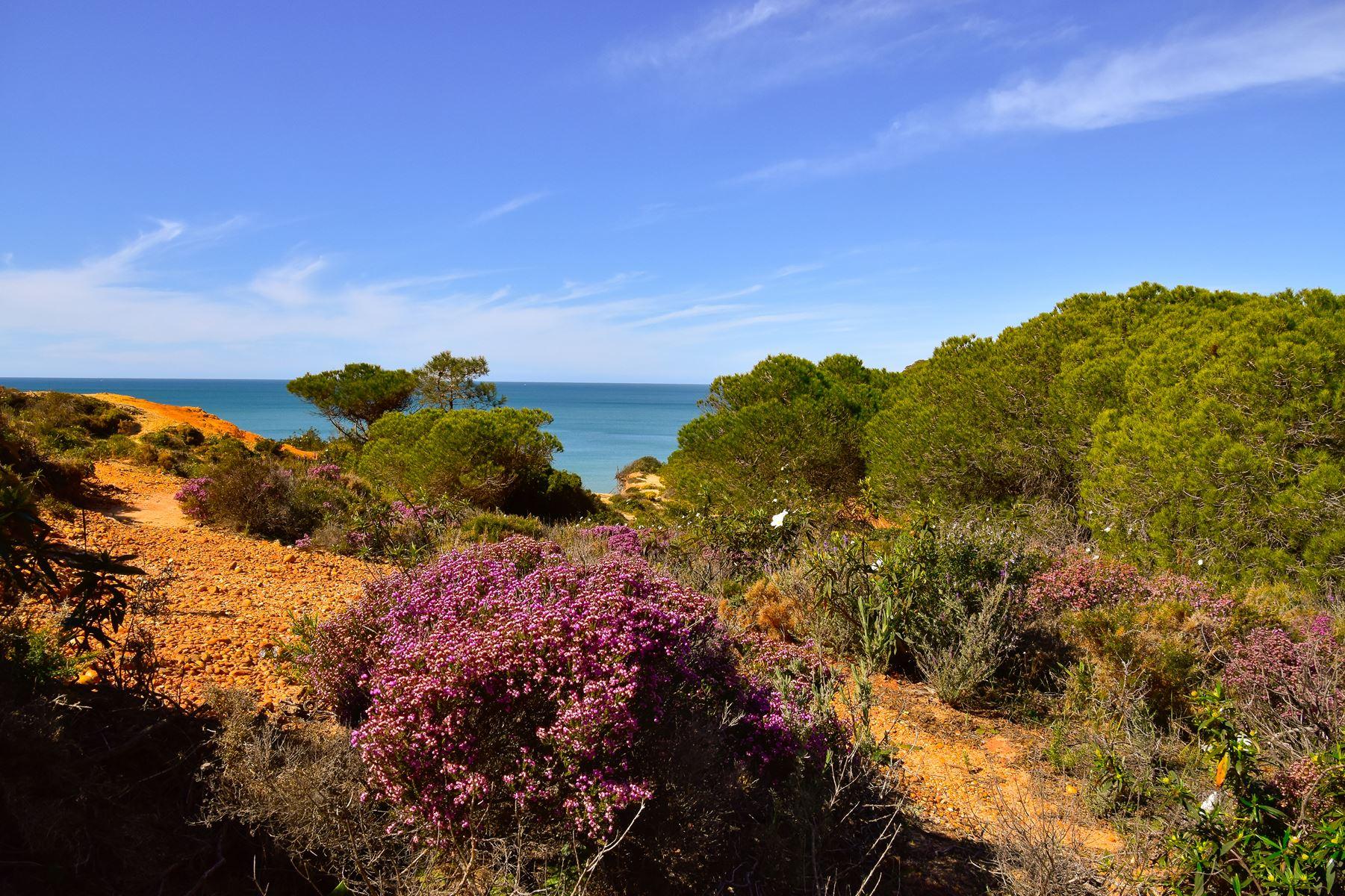 Algarve Natuur