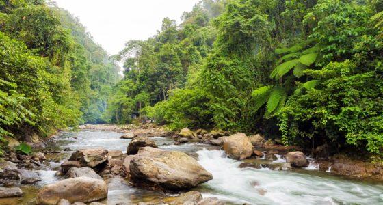 Bukit Lawang National Park