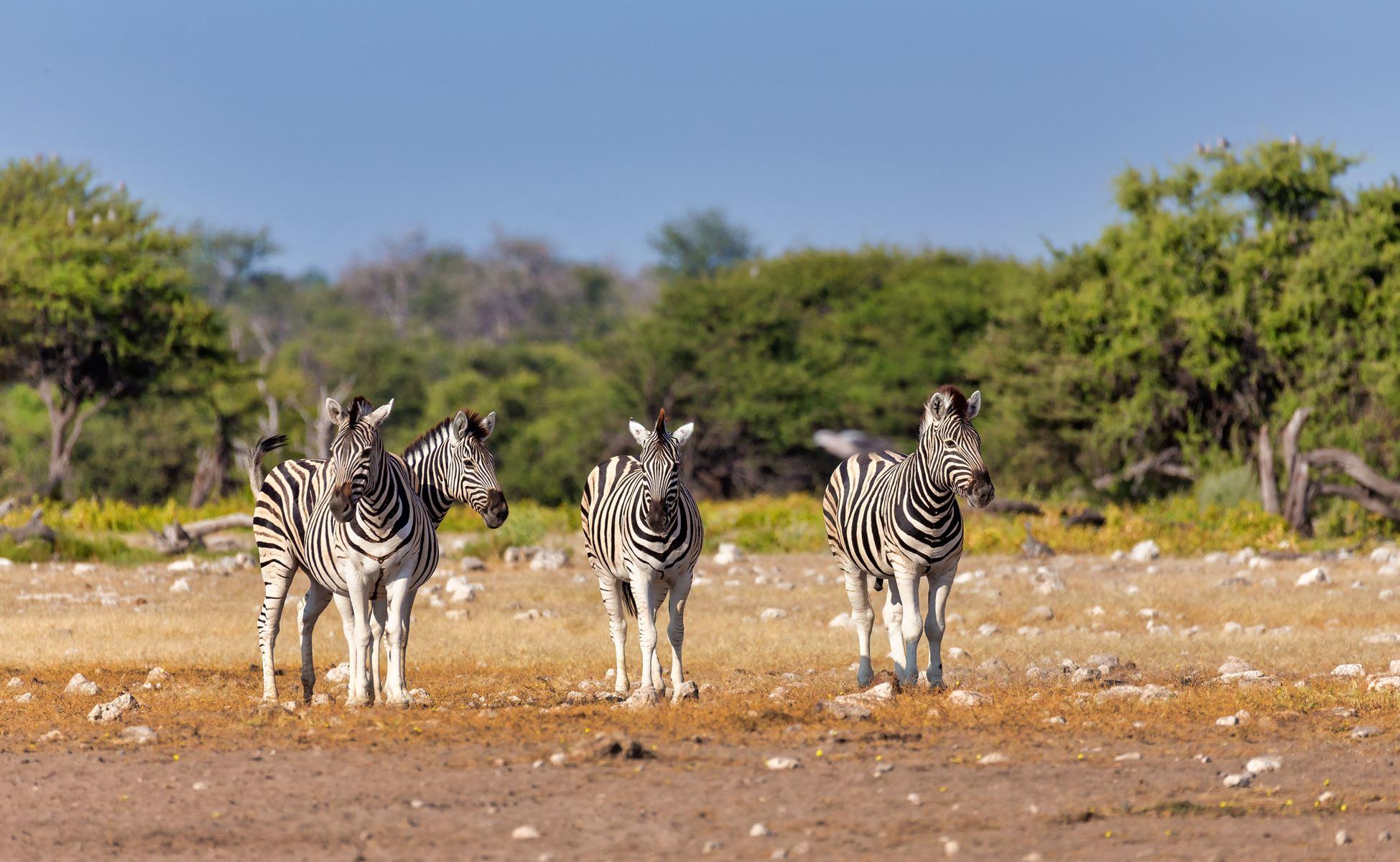 Namibie Safari