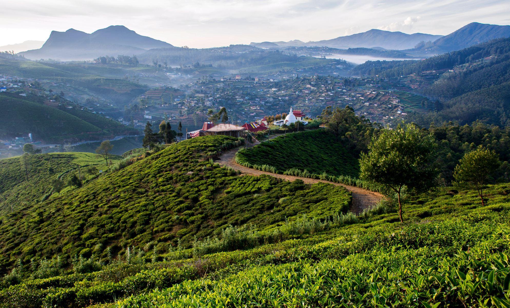 Sri Lanka Thee Plantatie