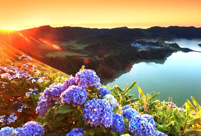 Bloemen op de Azoren