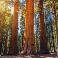 11-daagse autorondreis inclusief vliegreis Artisan Adventures in the Wild Northwest